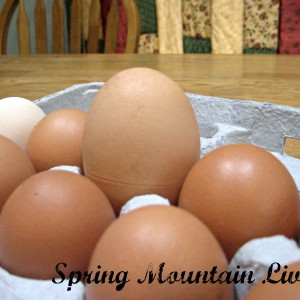 Considering Size of Farm-fresh Eggs – Complete with Cooking Chart