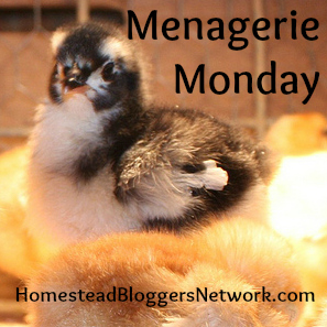 Menagerie Monday Button
