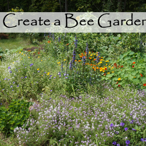 Planning a Garden for the bees