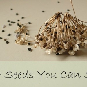 Plan Your Garden for Seed Preservation