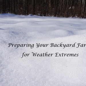 Prepare for Weather Extremes on Your Homestead