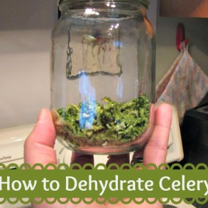 Tutorial: How to Dehydrate Celery