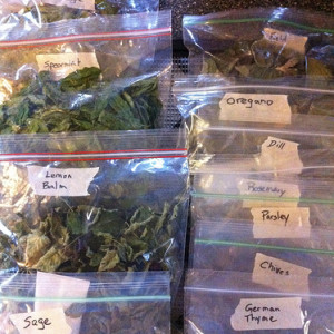 The Final Drying and Storing of Herbs