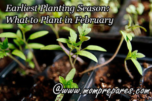 Earliest Planting Season: What to Plant in February