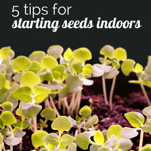 Tips for Starting Your Seeds Indoors