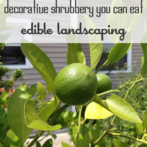Eidible Landscaping: Shubbery You Can Eat