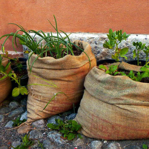Container Gardening for Northern Cities – Gardening Where the Light Don't Shine