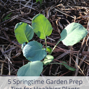 Springtime Garden Prep Tips for Even Healthier Plants