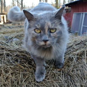 The Care and Feeding of Barn Cats