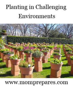 How To Plant in Challenging Environments