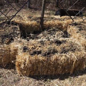 Straw Bale Gardening Methods
