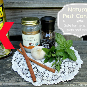 All Natural Pest Control