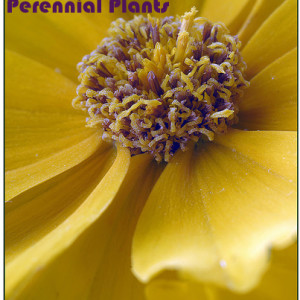 Easy to Grow Perennials