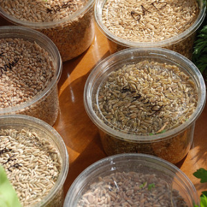 How To Store Grains
