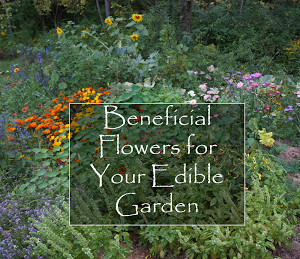 Beneficial Flowers for Your Edible Gardens