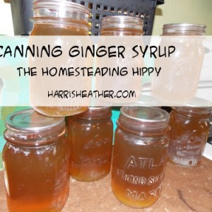 Canning Homemade Ginger Syrup