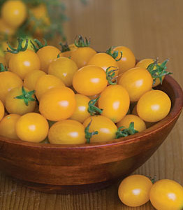 Tomato Varieties for a Container Garden