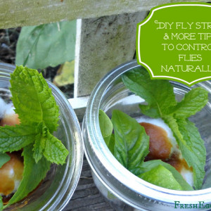 DIY Natural Fly Strips and Repellent Jars