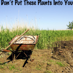 Plants to Keep Out of Your Compost
