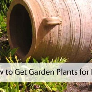 Learn to Get Garden Plants for Free
