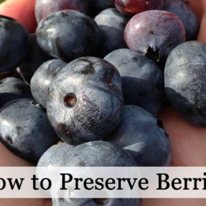 Learn How to Preserve Berries