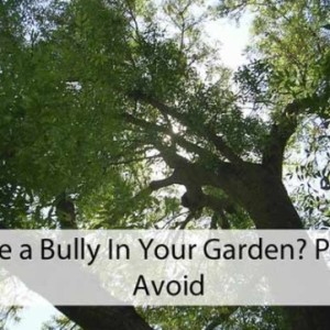 Plants to Avoid in Your Garden