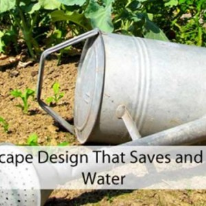 Save and Store Water with Landscape Design