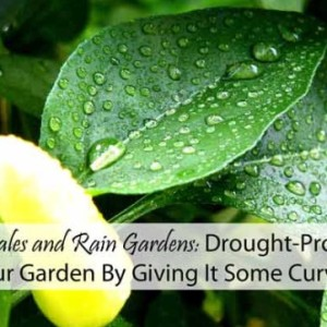 Drought-Proof Your Garden  with Swales