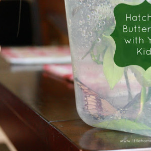 Hatching Butterflies with Your Kids