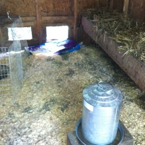 Keeping Your Chicken Coop Smelling Fresh