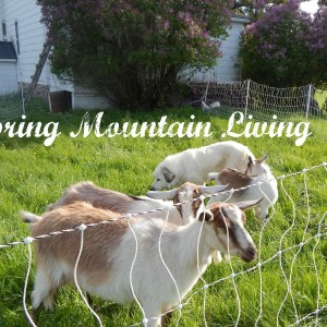 Using Our Goats to Help Clear our Land