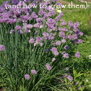 Top 10 Herbs for Your Garden and How to Grow Them