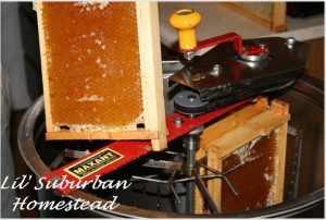 It\'s Officially Sticky Door Knob Season: The Honey Extraction Photos ...