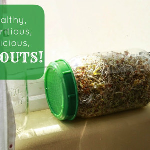 Sprouts – The Garden-less Green