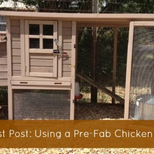 Buying and Using a Pre-Fab Chicken Coop