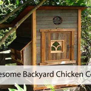 Great Backyard Chicken Coops to Buy or Build Yourself
