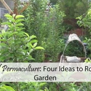 4 Practical Permaculture Ideas for Your Garden