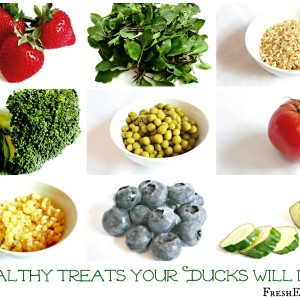 Healthy Treats for Backyard Ducks