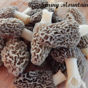 Guide to Cleaning Wild Mushrooms