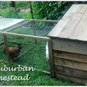 Upcycled Chicken Tractor