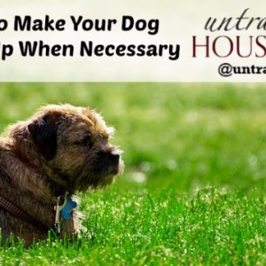How to Make Your Dog Throw Up when Necessary