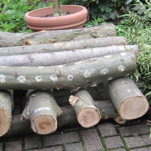 Forest Farming and Inoculating a Mushroom Log