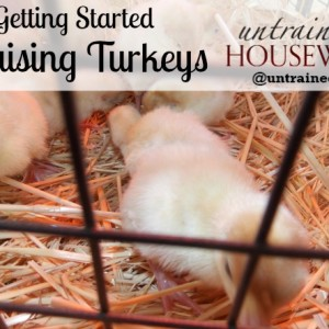 Get Started Raising Turkeys