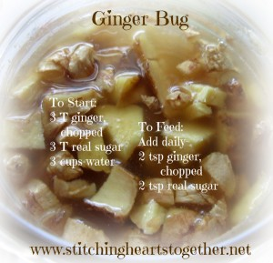 Ginger Bug- the care & feeding of your ginger bug