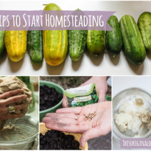 What is Homesteading? + 5 Easy Tips to Start Homesteading