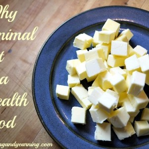 Why Animal Fat is a Health Food