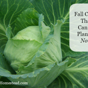 Fall Gardening: Crops that can be planted now