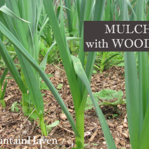 Mulching with Woods Chips