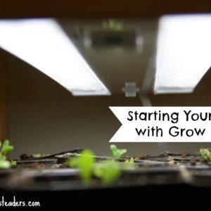 Starting Seeds with Grow Lights