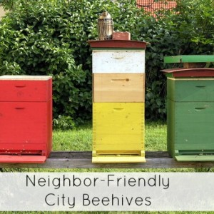 How to Keep City Bees Without Making Your Neighbors Angry